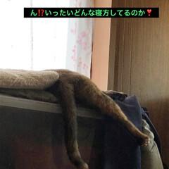 猫派/にゃんこ同好会 ほんと猫様は不思議な寝方しますよね。横に…