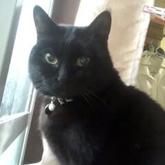 誕生日フォト/黒猫/くろママ 今日はくろママがお家に入った日。たまたま…(7枚目)