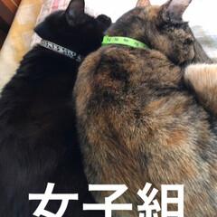 寝姿/猫/黒猫 早朝からご飯を食べ遊んでただ今おやすみ中…