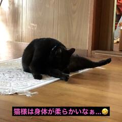 黒猫/にゃんこ同好会 とりあえず今日はゆっくりとさせてもらい時…