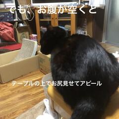 くろママ/黒猫/食事情 普段は本当に手のかからないくろママ。 だ…