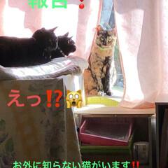 大騒動/表情/黒猫/猫 引っ越して来た時はじめは数匹うちへ遊びに…(1枚目)