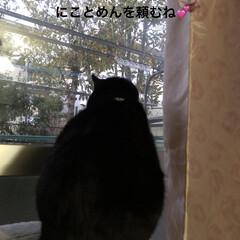 風景/黒猫/くろママ/通院/おでかけ 今日は通院日なので行きはバスと電車でへっ…(1枚目)