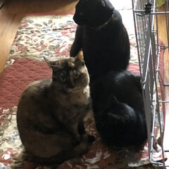 家族/黒猫/にこ/くろママ/めん/猫/... 今日は通院日。休憩して起きてきたら猫様た…