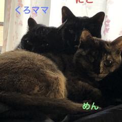 黒猫/猫/家族 今朝は早朝起きて猫様たちのご飯をあげたら…