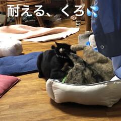 親子/めん/猫/くろ/黒猫 珍しくくろがめんにケンカをぶっかけてた⁉…(10枚目)