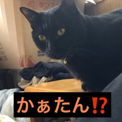 黒猫/にゃんこ同好会 皆さまお元気にお過ごしの様子。私は体調不…(3枚目)