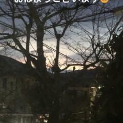くろ/にこ/黒猫/猫/めん/新生活/... おはようございます😃 朝から猫様もごはん…(1枚目)