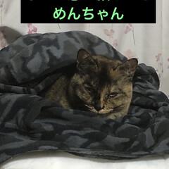 寝場所/にこ/黒猫/くろママ/猫/めん/... すっかり定着した猫ベッド😺でも3つあるの…