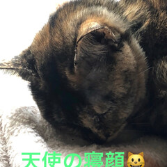 きょうだい/黒猫/猫/リミアの冬暮らし 朝ごはん食べて走り回ると疲れてねてます。…