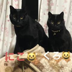 親子/黒猫 珍しいくろママとにこのツーショット😺😺も…