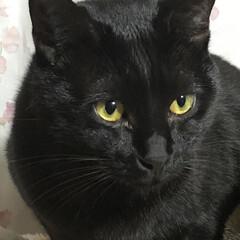 黒猫 ぼくも負けてられない😺 めんだけずるい❣…