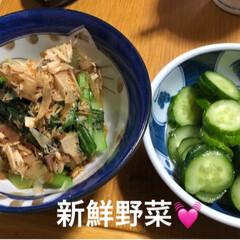 家族/猫/寝顔/黒猫/新鮮野菜/暮らし/... 今日買ってきたお野菜。さっそく小松菜のお…