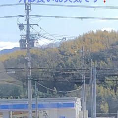 風景/黒猫/くろママ/通院/おでかけ 今日は通院日なので行きはバスと電車でへっ…(2枚目)