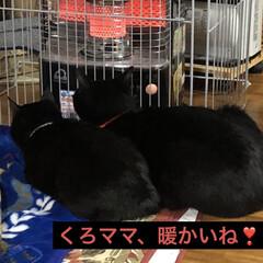 ストーブ/会話/黒猫 おはようございます。今朝の一コマです。朝…