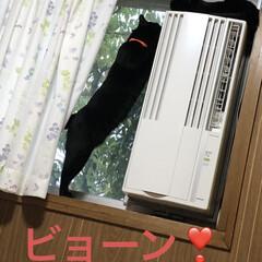 黒猫/にゃんこ同好会 上に乗ってるのがくろ。 にこはくろママが…