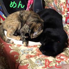 仲良し/寝顔/猫/黒猫 連投すみません。この頃一緒に寝なくなって…