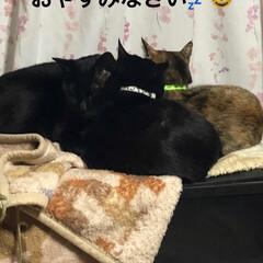 団子/家族/猫/黒猫 やっぱり3匹くっついて寝たいようです🥰