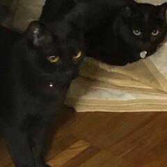 寝顔/黒猫 どうしてるかと様子を見に行くと 左にこ右…