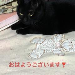 猫/めん/にこ/くろ/黒猫 早朝からアクティブな猫様たち🤣