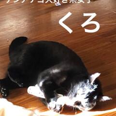 お気に入りおもちゃ/家族/黒猫/猫 ふとみるとめんが😱干された布団のようです…(3枚目)