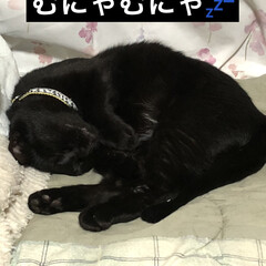 寝顔/黒猫 普段めったに見れないくろの無防備な寝顔。…