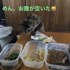 めん/猫/お昼ごはん お昼ごはんに冷蔵庫の残り物を食べようと用…