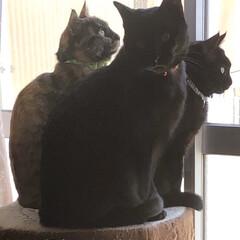 猫/めん/黒猫/くろママ/にこ 3匹そろって切り株に乗ってる💕3匹を抱き…