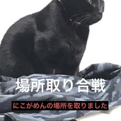 家族/猫/めん/くろママ/にこ/黒猫 今日とまた場所の取り合いが始まりました。…