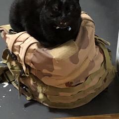 黒猫/にゃんこ同好会 くろはこのリュクサックがお気に入り💕夜中…
