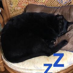 寝顔/黒猫 連投すみません。今度はにこ❣️身体は大き…