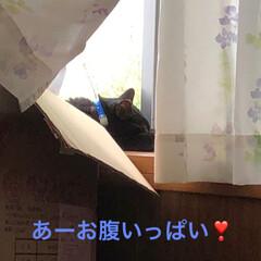 黒猫/にゃんこ同好会 先週はいろいろ忙しく私はギブアップ😵旦那…(1枚目)