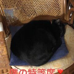 寝姿/猫/黒猫 早朝からご飯を食べ遊んでただ今おやすみ中…(2枚目)