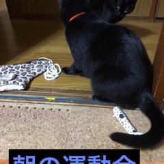 黒猫/にゃんこ同好会 早朝から失礼します。今日は旦那さんの出勤…
