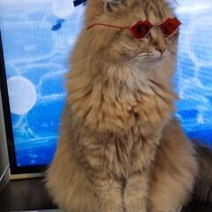 フォロー大歓迎/LIMIAペット同好会/にゃんこ同好会/うちの子ベストショット つぶちゃん、snowで遊ばれる(笑) 猫…(1枚目)