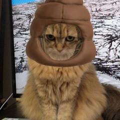 フォロー大歓迎/LIMIAペット同好会/にゃんこ同好会/うちの子ベストショット つぶちゃん、snowで遊ばれる(笑) 猫…(2枚目)