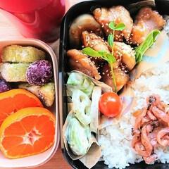 ごはん/おうちごはん 2019最初のお弁当(´౿`)♡ 鶏とゆ…