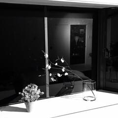 一輪挿し/植木鉢/出窓/セルフリノベーション/観葉植物/中古物件/... 観葉植物のお店で、お目当てのガラスの鉢を…