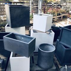 観葉植物/中古物件/セルフリノベーション/植木鉢/DIY いい植木鉢ありました。 観葉植物とセット…