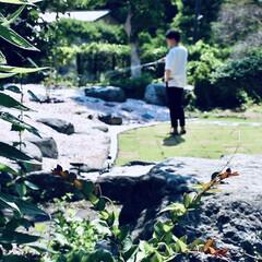 日本庭園/ガーデニング/庭/リノベーション/DIY/住まい/... ポンカンの木育てます。 https://…