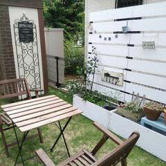 プランター付きフェンス/gardening/庭/雑貨/100均 ちょっといじり始めた庭♪