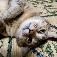 おもしろ猫/猫と暮らす/にゃんこ同好会/猫/ペット みーちゃんの変顔3    む〜ん🙃(1枚目)