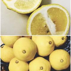 日向夏/柑橘系/柑橘類/はるか 先月コンテナいっぱいもらった【はるか】 …