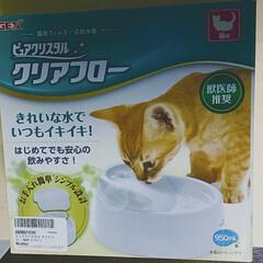 猫 水/ピュアクリスタルクリアフロー ピュアクリスタルのACアダプターが 壊れ…