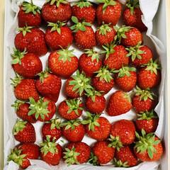 苺/イチゴ/いちご/暮らし とれたてのイチゴ🍓もらった‼️😍