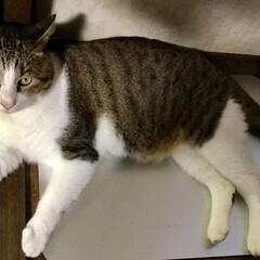 猫派/にゃんこ同好会 ずいぶん前から用意してたアルミ板の上にや…