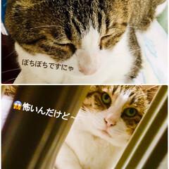 ねこ/ネコ/猫 まだまだ病院通い💦週に2回 ご飯もちょび…