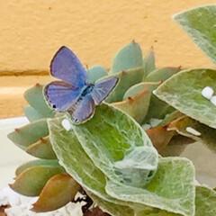 蝶 外の植木鉢に 親指の爪ぐらいの大きさの …