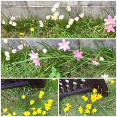 ガーデニング/花 🌀台風も無事過ぎて ☔️が多くなってきた…