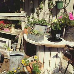 玄関横/ジャンクガーデン グリーンがメインです。 もう少し花を増や…
